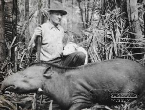 Van Dijk met tapir 1955
