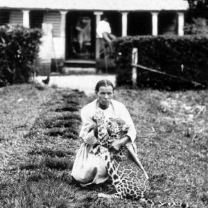 Wilhelmina rozenberg met tijger detail